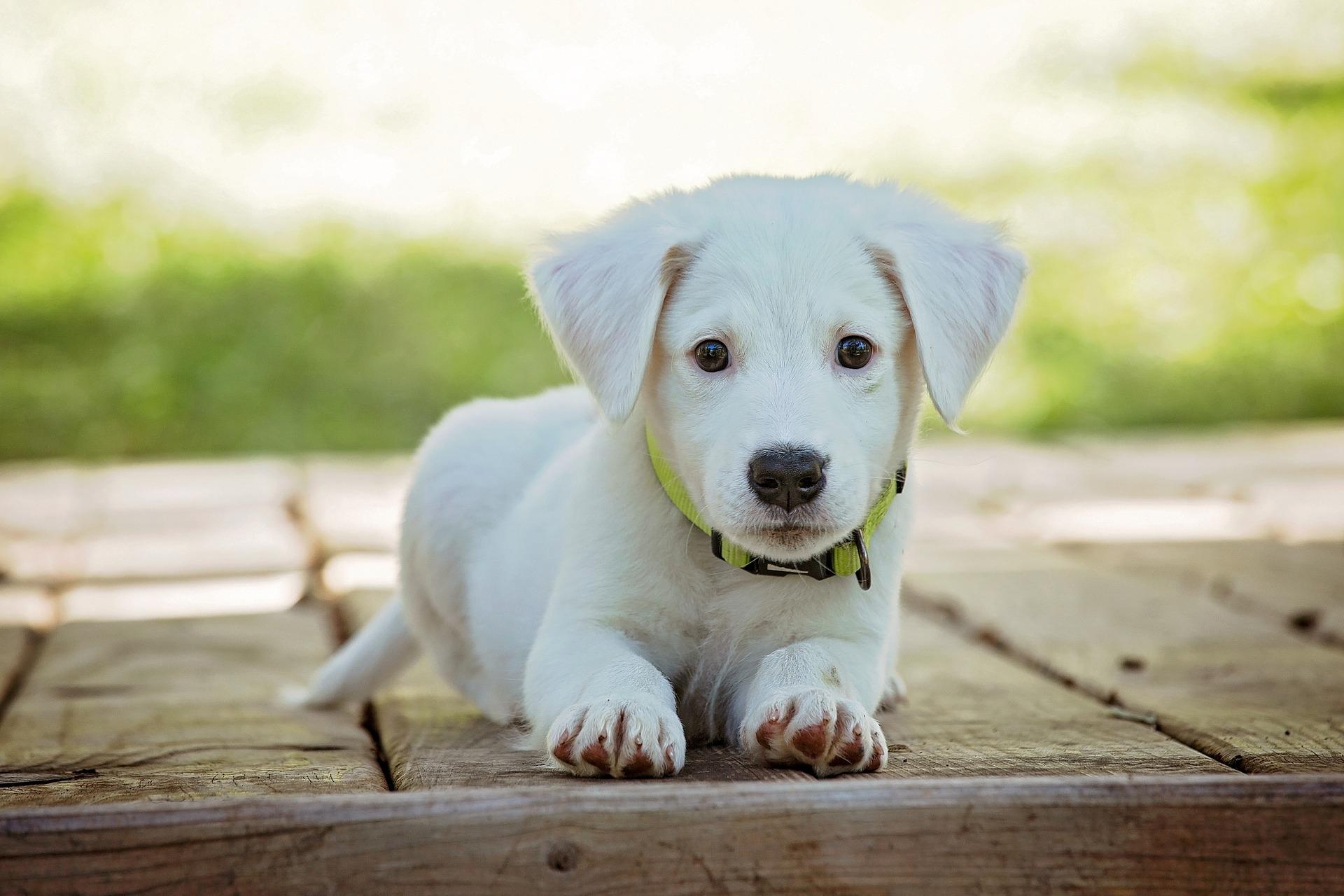 animal de estimacao - Dentro ou fora de casa: Qual é o lugar ideal para seu animal de estimação
