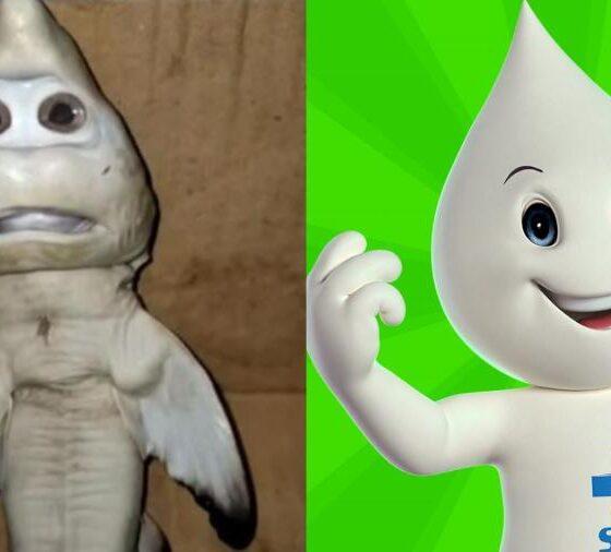 """tubarao com feicao humana e comparado ao personagem ze gotinha 560x506 - Tubarão com """"Rosto humano"""" encontrado na Indonésia por pescador é comparado com Zé Gotinha; Vídeo"""