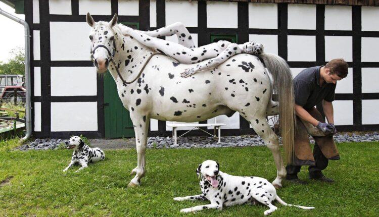 Horse 456KHDng Jo%CC%88rg Du%CC%88sterwald 300x200 1 750x430 - Consegue encontrar uma mulher nesta imagem? Então seu QI está bem acima da média