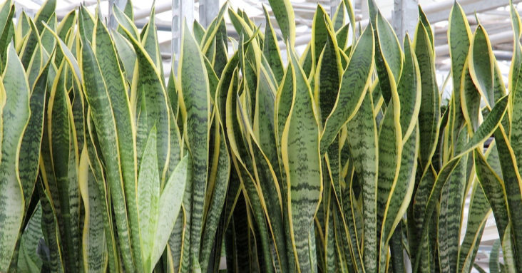 img 60bf632ec49969349 - Se você tiver essas plantas em casa jogue-as agora mesmo